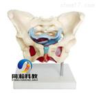 THM-125女性骨盆及盆底肌肉模型|骨骼