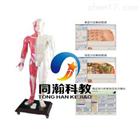 THZY2211E光電感應人體針灸穴位發光模型