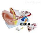 THM-303A大耳解剖模型