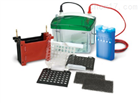 Mini Trans-Blot Electroph美国伯乐小型转印槽电泳槽1703930