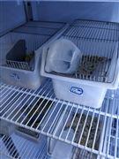 大量飼養小白鼠飼養箱