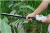 植物冠层测定仪SYE-GG01