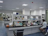 Western blot实验代测,WB实验操作注意事项