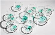 潍坊玻璃仪器培养皿