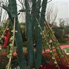 树木防寒包树布