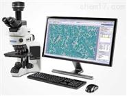 奥林巴斯Stream显微图像分析软件
