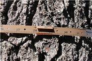 Dendrometer D1树体茎干生长记录仪