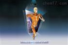 係統解剖3D虛擬教學係統