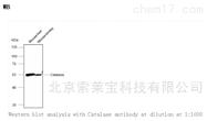 K106703PAnti-Catalase Polyclonal Antibody