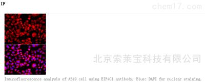 Anti-EIF4G1 Polyclonal Antibody