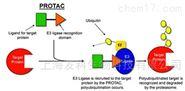 山羊抗小鼠IgG(HorL),FITC标记