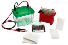 Mini TBC 小型湿式转印电泳槽电泳设备