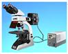 LB-278荧光生物双目显微镜