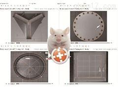 ANY-maze動物行為軟件