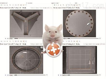 動物行為軟件
