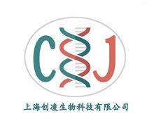 病理实验特殊染色技术服务