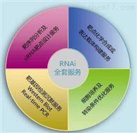 RNA干扰RNAi基因干扰SiRNA实验服务
