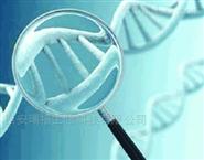 瑞禧产品-DOPE-PEG-EPOX环氧化物
