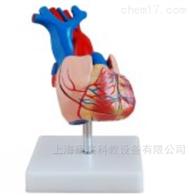 KAC/307A自然大心脏解剖模型