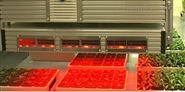 植物生理生态高通量荧光成像监测系统