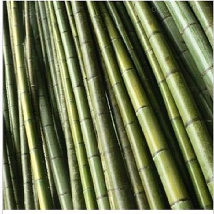 天津树木支撑杉木杆 竹竿批发