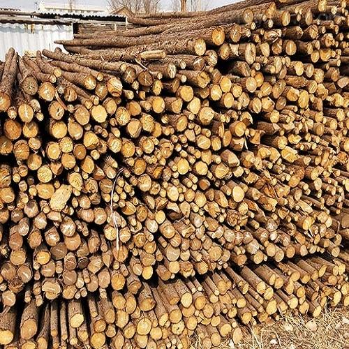 天津树木防寒杉木杆 树木支撑杆