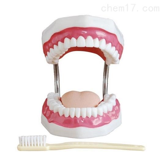 医博牙齿护理保健模型(放大5倍)