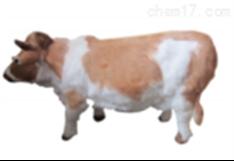 牛听诊检查模型