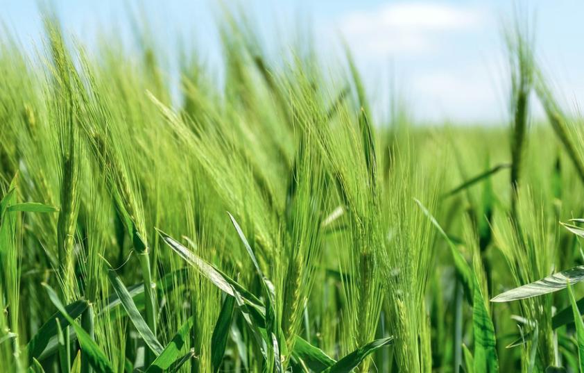 四大仪器商成功中国农业科学院饲料研究所采购项目