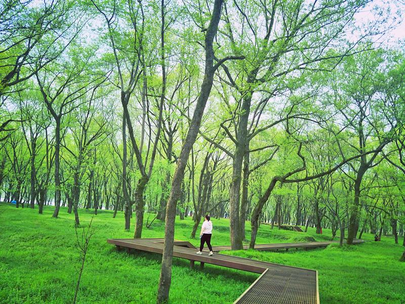 千年古树获赞 如何用科学仪器守护岁月之美