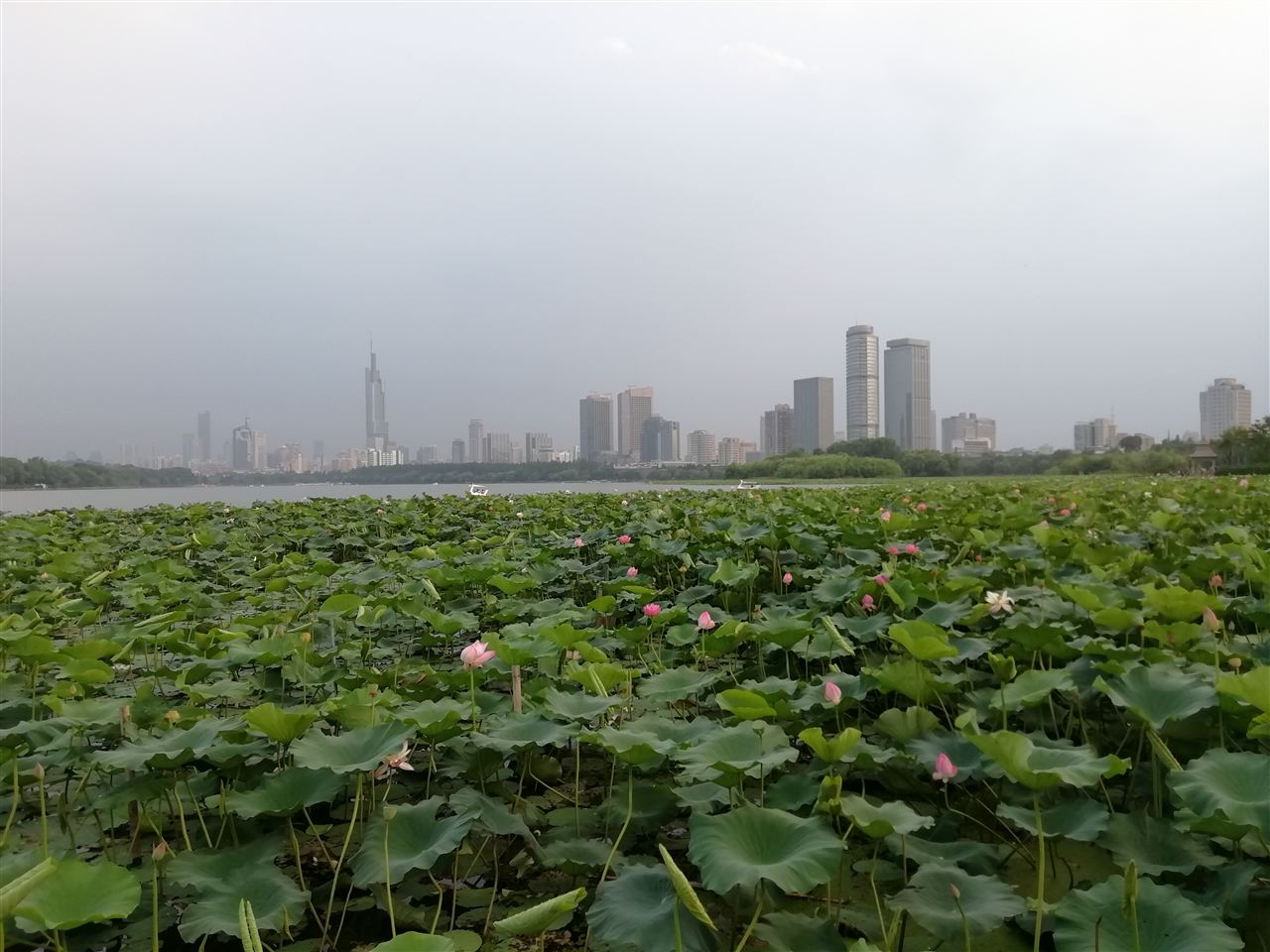 环境监测领域拓宽 生态监测护三江源环境安全