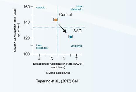 细胞能量代谢技术服务