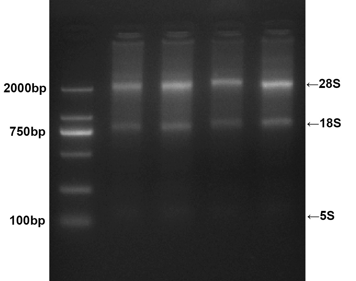 <strong>血液RNA DNA小量提取试剂盒提取系列</strong>