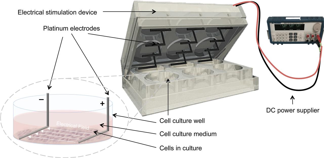 高通量电刺激细胞培养系统