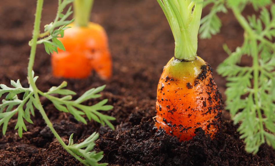 高智能全项目土壤肥料养分检测仪