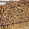 1米--6米天津树木防寒杉木杆 树木支撑杆